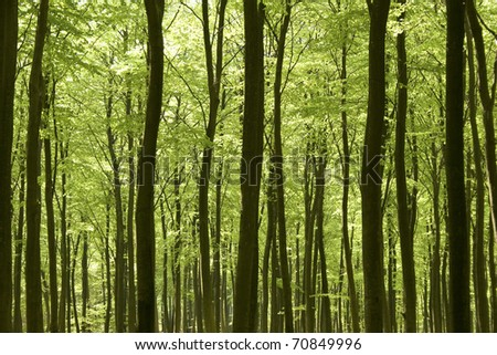 Forest in springtime
