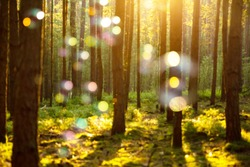 FOREST IN SUN LIGHT WITH COLORFUL BOKEH LIGHTS AND BUBBLES AT BEAUTIFUL SUNNY SUMMER DAY, BRIGHT NATURAL BACKGROUND IN THE WOODS