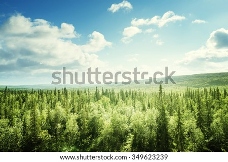 Shutterstock forest in sunny day