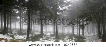 Forest in the fog - stock photo