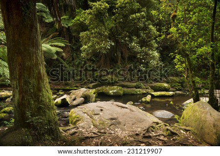 Forest in the Great Otways National Park along the Great Ocean Road, Australia