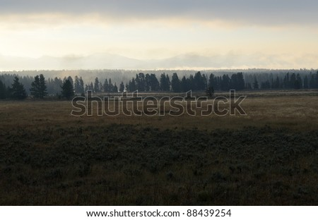 forest in the Hayden Valley at sunrise with fog
