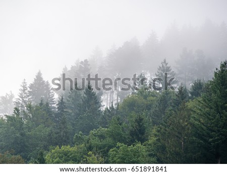 Forest in the mist #651891841