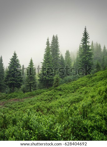 Forest in the mist as a background. Beautiful natural landscape in the summer time #628404692