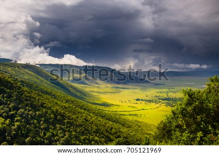 Forest in The Ngorongoro Crater - Tanzania