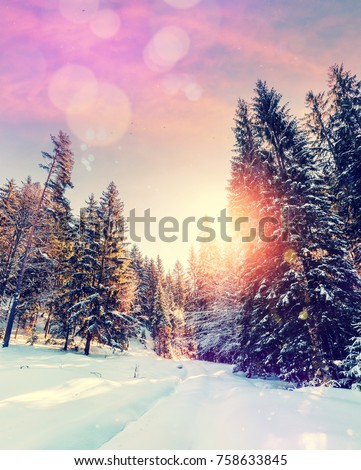Forest in winter covered by snow. pine trees under sunlight. wintry scene with colorful sky. road in the forest. instagram filter. soft light effect #758633845