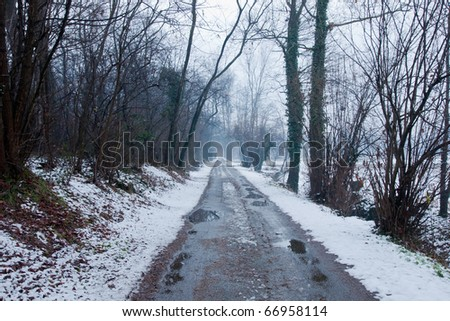 forest in winter with a countryside street and water and tree