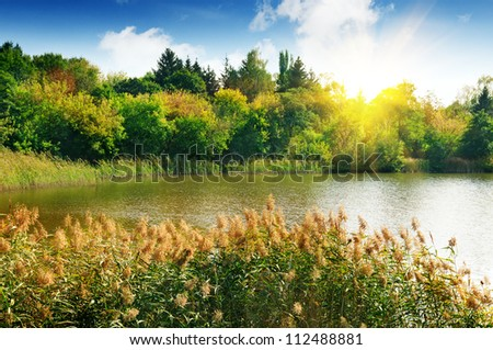 Forest lake in the rays of dawn