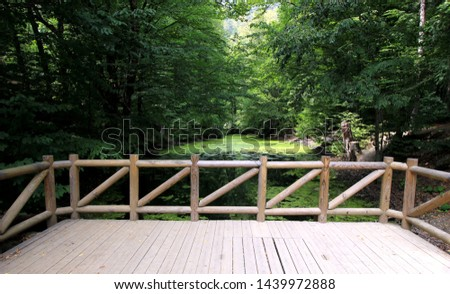 Forest lake nature nature background nature landscape #1439972888