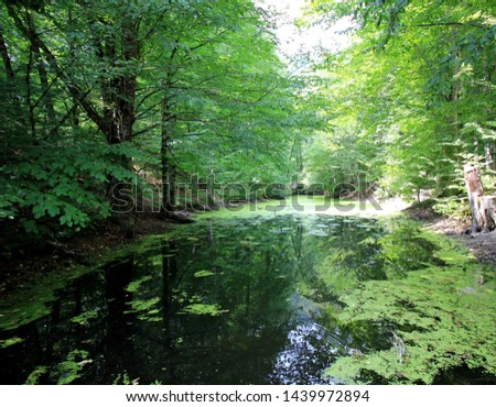 Forest lake nature nature background nature landscape #1439972894