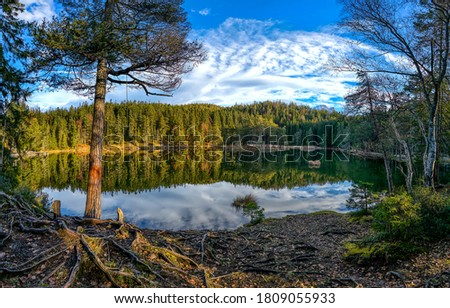 Forest lake shore landscape. Lake in forest. Forest lake water. Autumn forest lake landscape