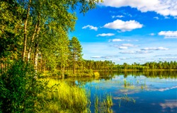 Forest lake trees in spring nature