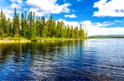 Forest lake trees landscape view. Lake view in summer