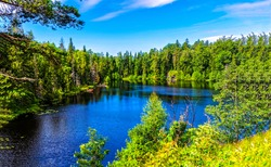 Forest lake water summer nature
