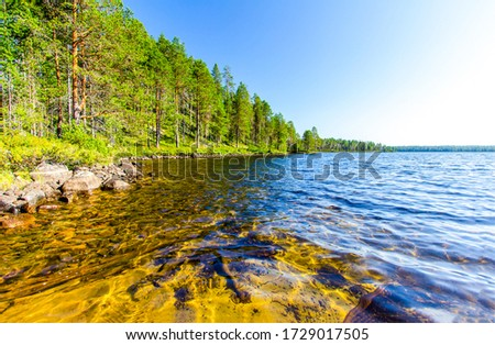 Forest lake water trees landscape. Lake shore in forest