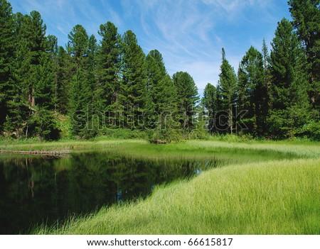 Forest lake, wild landscape, Altai, Russia