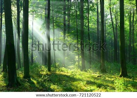Forest landscape #721120522