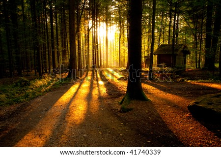 Forest landscape at the end of autumn. The magic light of the setting sun through the trees.