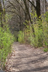 Forest landscape. Dirt path in the middle of the forest. Green bushes grow along the roadside. The branches of deciduous trees form a vault