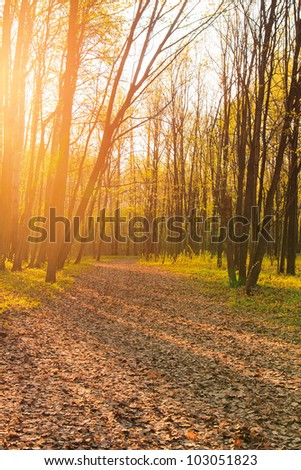 Forest landscape in evening time with long shadows from trees