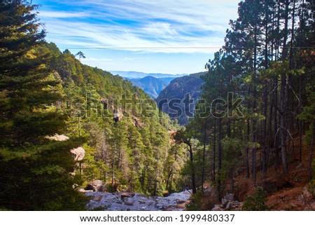 forest landscape  in sierra madre occidental, mexiquillo durango mexico Foto stock ©