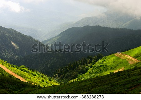 Forest Landscape Mountain Forest Landscape Landscape Of Mountain