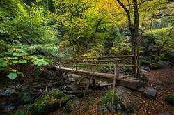 Forest landscape near Fotinovo in Rhodopes Mountain, Pazardzhik region, Bulgaria. Amazing autumn landscape