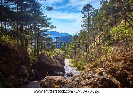 forest landscape, sierra madre occidental in Durango Mexico Foto stock ©
