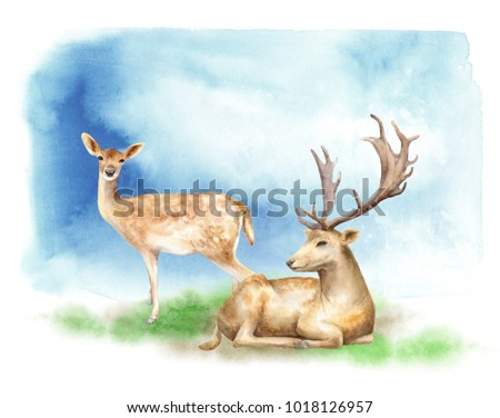 Forest landscape. Watercolor illustration. Male and female deer are sitting on the edge.