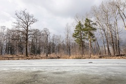 Forest landscape with bare trees and a frozen lake. Early spring.