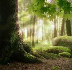 Forest landscape with thick tree, mossy stones, sun light rays