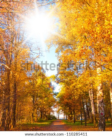 Forest Landscape Yellow Trees