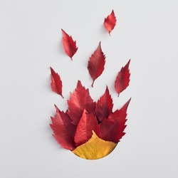 Forest leaves composition flat lay. Red and yellow dried foliage. Elm leafage isolated on white background. Autumn season idea. Natural flora, botanical decoration. Bonfire concept