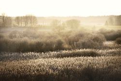 Forest meadow at sunset. Pure sunlight, sunbeams, fog, haze. Golden plants close-up. Atmospheric spring landscape. Nature, environmental conservation, ecology, seasons