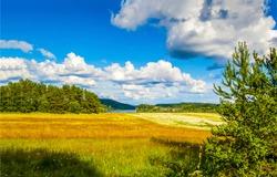 Forest meadow field landscape. Summer forest meadow view. Forest meadow scene
