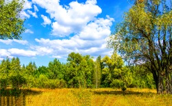 Forest meadow in sunny day. Meadow forest landscape. Sunny day in meadow forest