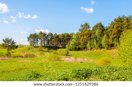 Forest meadow landscape. Meadow forest scene. Forest meadow view. Green meadow view #1251629386