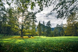 Forest meadow trees in mountains. Autumn forest meadow grass