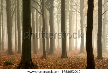 Forest mist in autumn at dawn. Misty forest trees. Forest in mist. Forest mist