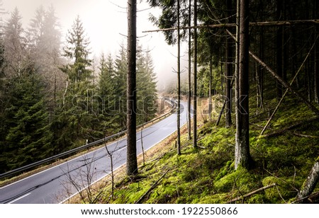Forest mist road turn view. Forest road view. Road in misty forest. Forest road in mist