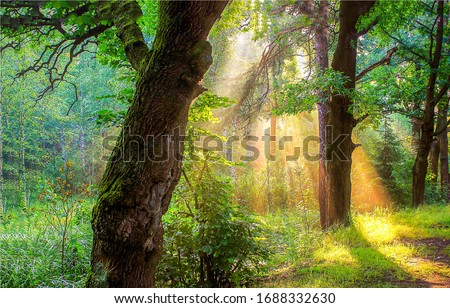 Forest morning sunrise rays view. Sunrise in forest. Sunrise forest shadows. Forest sunrise shadows trees