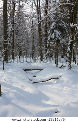 Forest narrow stream frozen and fresh snow covered crossing deciduous stand - stock photo