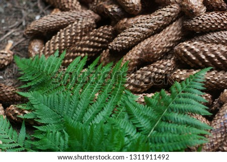 Forest natural background of beautiful fir cones and fern #1311911492