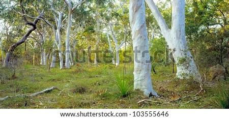 forest, Noosa Northshore