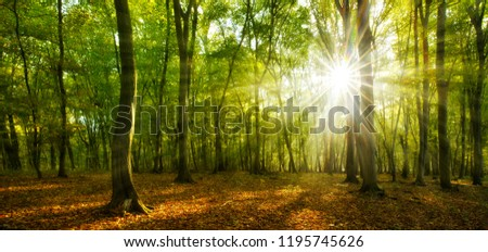 Forest of Beech and Oak Trees illuminated by sunbeams through fog #1195745626