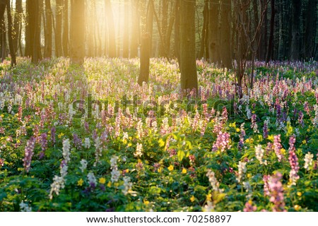 Forest of brightly coloured flowers #70258897