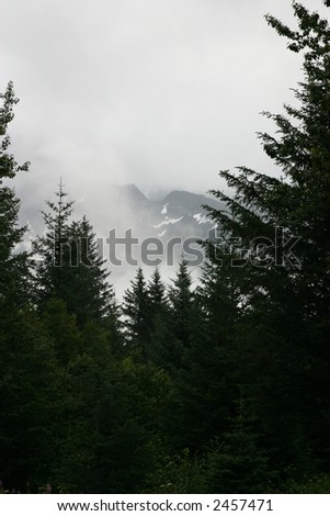 Forest of Evergreens in Alaska
