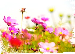Forest of  flowers isolated on white