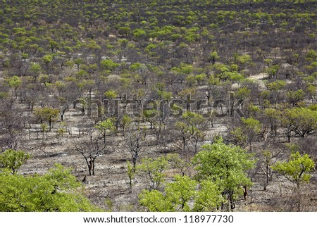 Forest of Namibia birds eye view