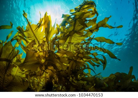 Photo of  Forest of Seaweed